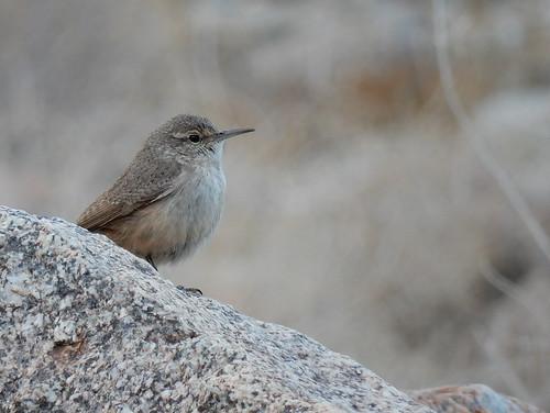 Borrego Palm Canyon Trail - bird