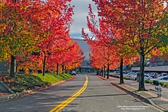 Maples at Tacoma Convention Center