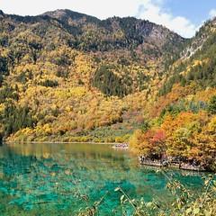 ทะเลสาบดอกไม้ห้าสี  #จิ่วจ้ายโกว วันนี้ (23 ตุลาคม 2559) กำลังเปลี่ยนสี สวยเลยครับ
