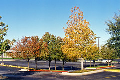 Fall Colors in Parking Lot, Hurst, Texas, 1994
