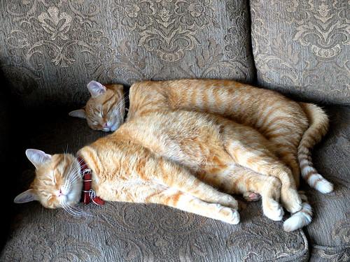 Vincent & Pekoe