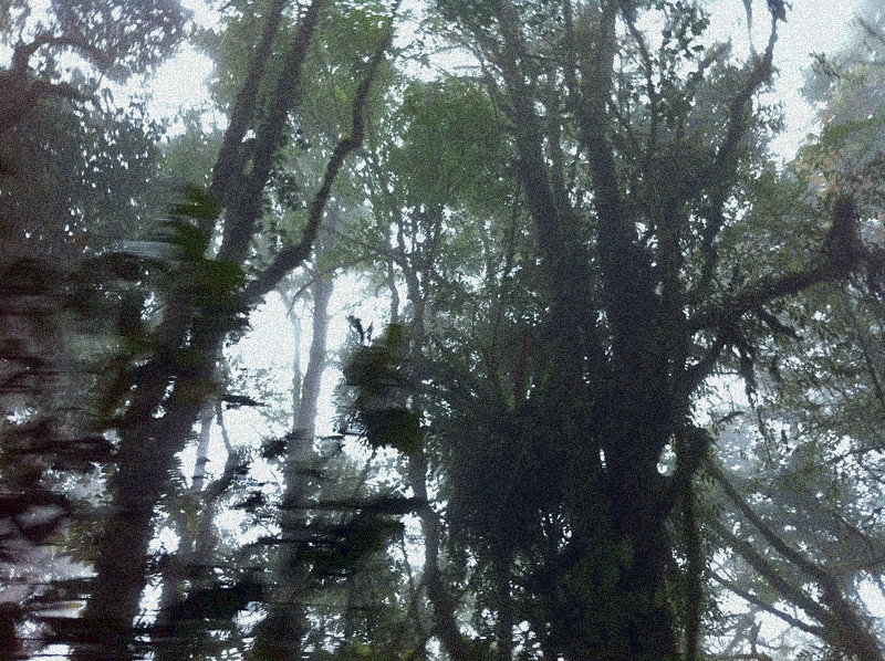 mount irau mossy forest (2)