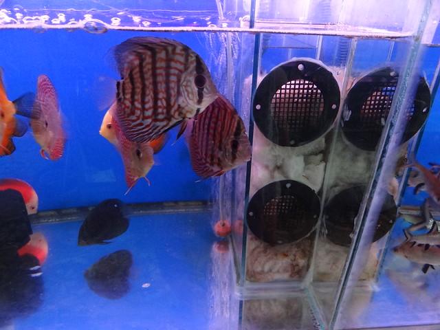 aquarium stores in Danang, Vietnam 20807770326_dcf3ed4283_z