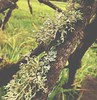Lovely lichens. #nature #sauvieisland #oregon #beautiful