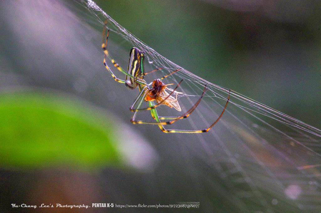 蜘蛛、小蟲、小花兒!
