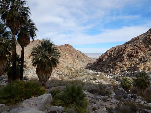 Joshua Tree NP - 49 palms trail - 3