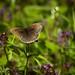 A Flutterby