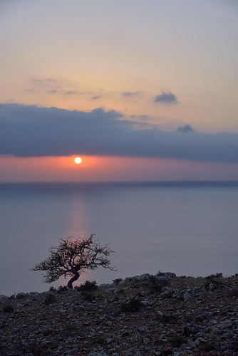 shouab shu'ub red shrub socotra sunset yemen hadhramautgovernorate ye