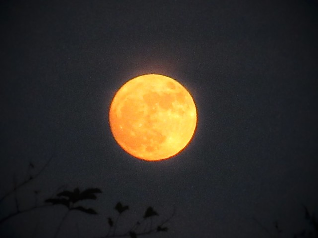 supermoon florida tonight live, Canon POWERSHOT ELPH 350 HS