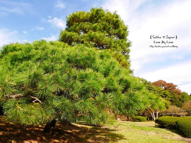 日本東京自由行新宿御苑庭園景點 (28)