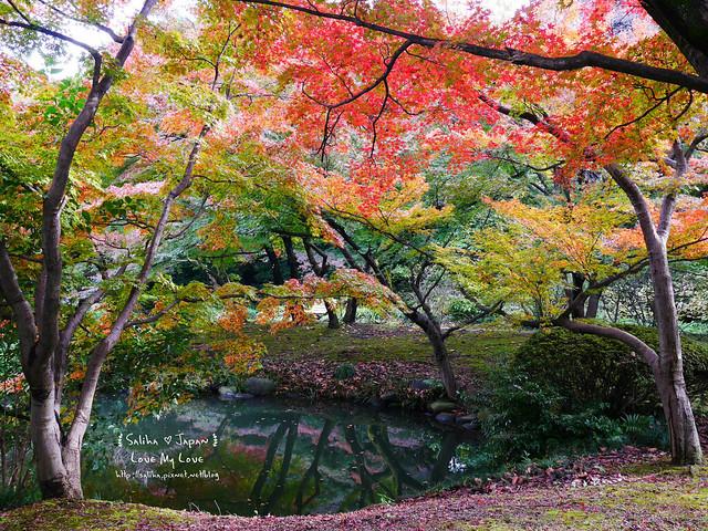 日本東京自由行新宿御苑庭園景點 (14)