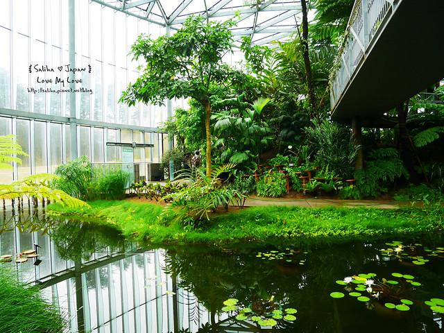 日本東京景點新宿御苑溫室植物 (19)