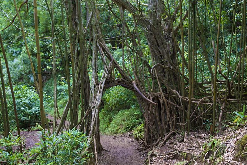Hawaii_210