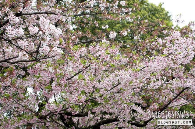 japan tokyo trip ueno park 24