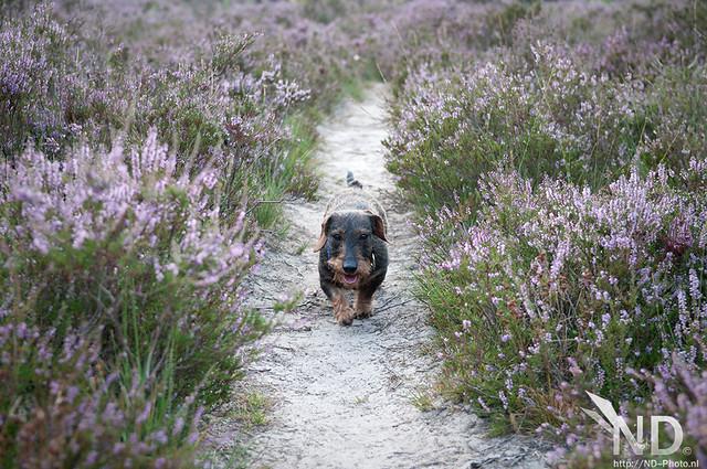 Ollie walk