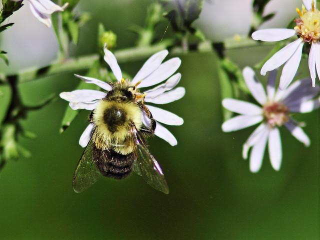 Bumblebee 2-20150921