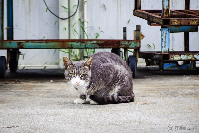 Today's Cat@2015-09-19