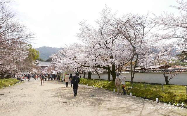 0402D8京都醍醐寺-1160255