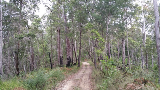 Open eucalypt forest with sandy heath understory