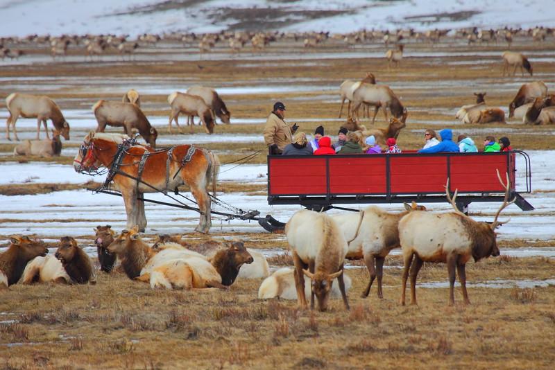 IMG_1175 Last Week Sleigh Ride, National Elk Refuge