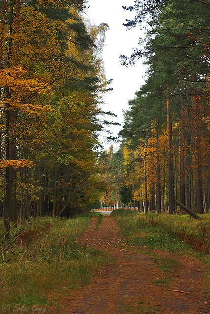 autumn_roads_01