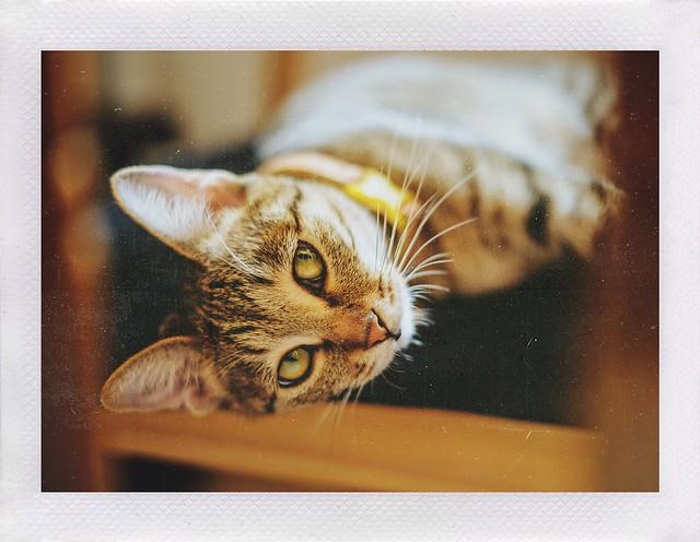 Leica Cat.