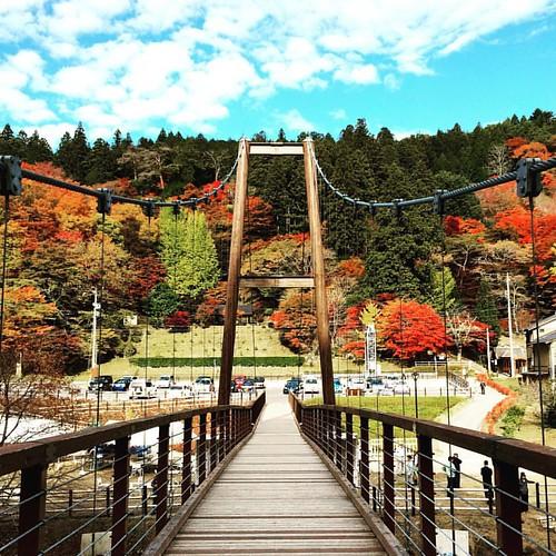 秋の吊り橋  Suspension bridge  #秋 #紅葉 #夕暮れ #空 #Autumn #bridge