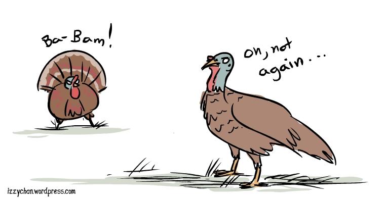 male female turkey