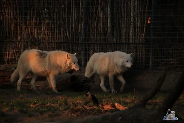Zoo Berlin 27.11.2015   28