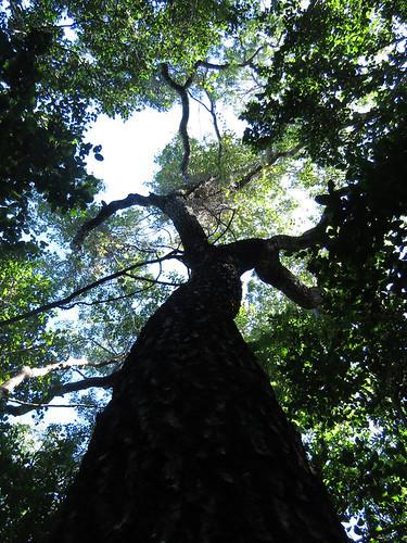 Primeval Forest #4