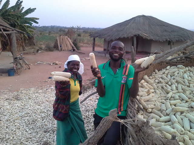 Stephen Nyirenda and his wife show off some of the produce from their farm Photo credit: CIMMYT