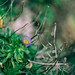 IMG_9910-Edit-Edit.jpg