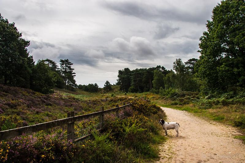 Grey skies as we head onto the heath
