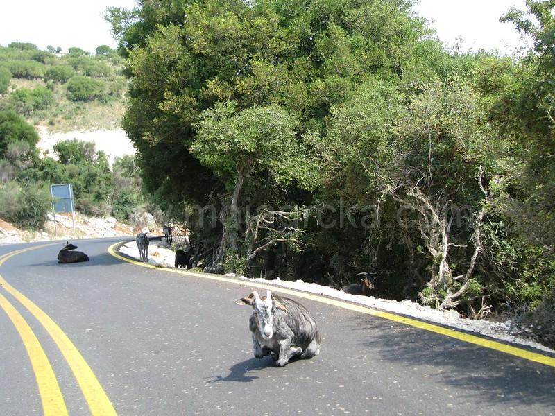 Na-putu-prema-Assosu-Kefalonija-Grcka-Greece-road-to-Assos-11