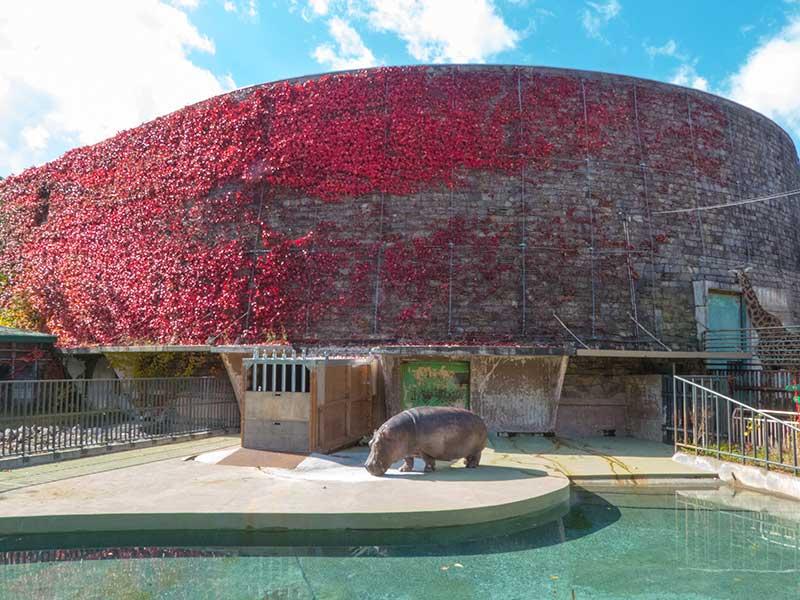 円山動物園の紅葉