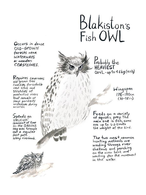 Owls_13_Blakistons_Fish