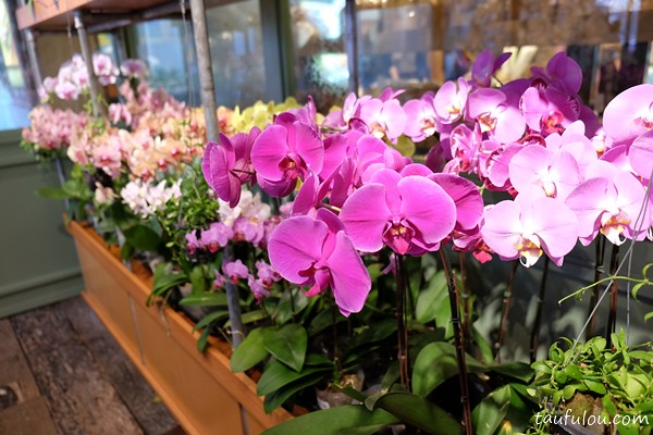 ORchid Culture (13)