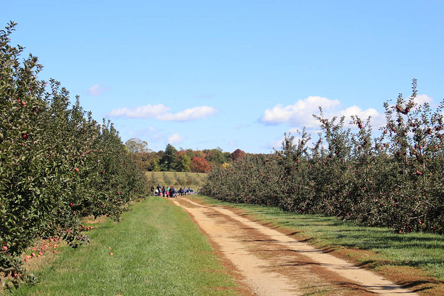Apple picking 2015