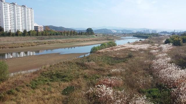 공릉천 관찰일기-가을풍경