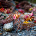Nara, Momiji and Pine leaf litter by ∞ monkeys with cameras - in limbo/no mojo