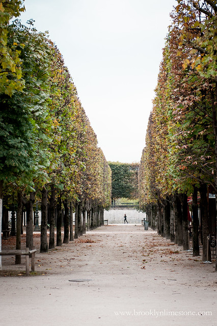 Straight rows of Trees in a Paris Park