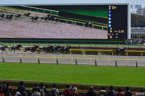 東京10R 赤富士ステークス Akafuji Stakes
