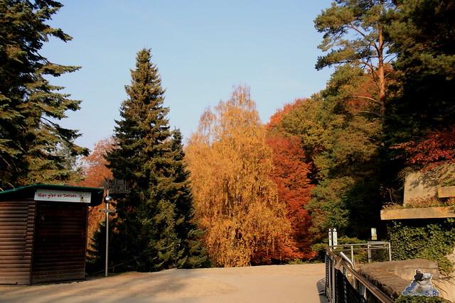 Eisbär Fiete im Zoo Rostock 31.10.2015 Teil 1  0110