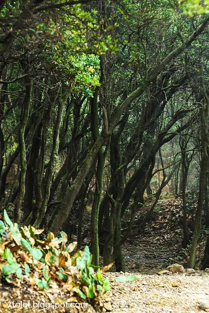 ciwidey hutan cantigi2-0370rw