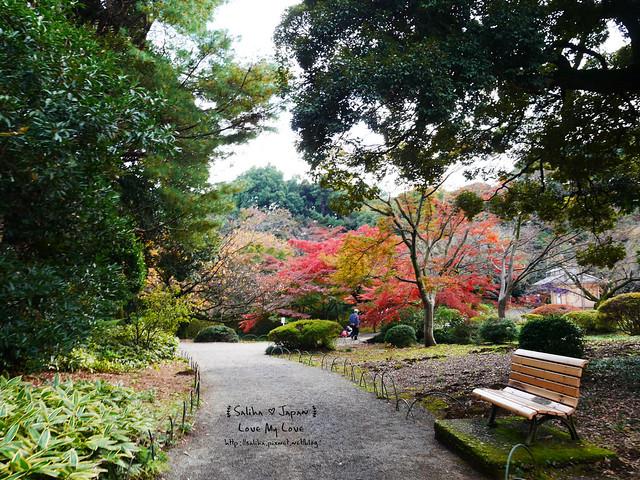 日本東京自由行新宿御苑庭園景點 (29)