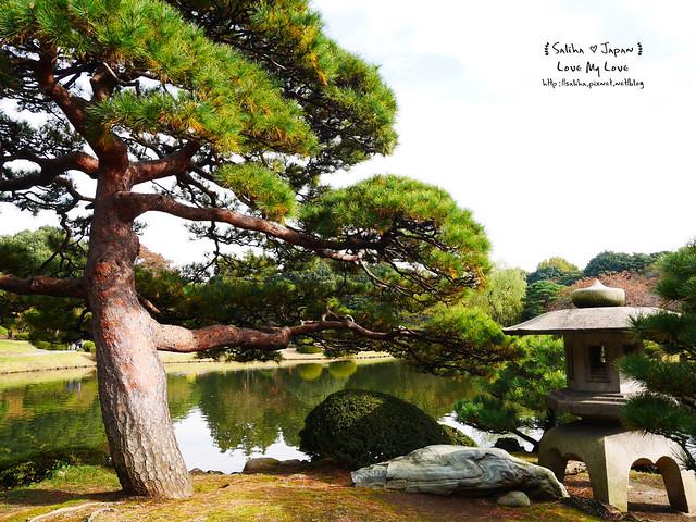 日本東京自由行新宿御苑庭園景點 (23)