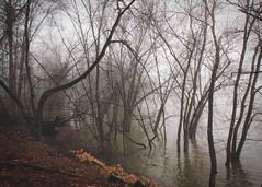 Tidioute Bird Trail - Foggy River