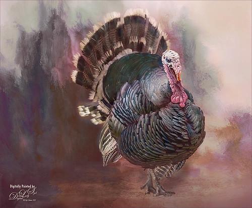 Image of a Wild Turkey
