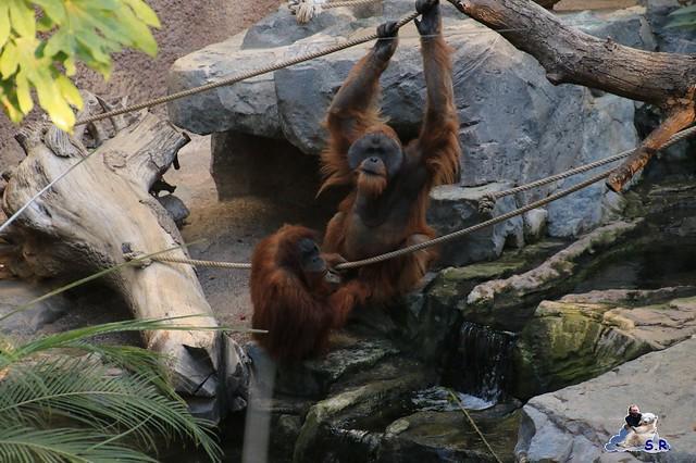 Tierpark Hagenbeck 27.09.2015 0135