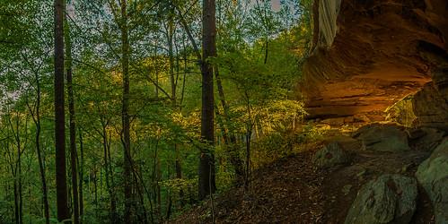 white fall forest sunrise branch danielboonenationalforerst whitebrancharch 20151011 archrawedited2